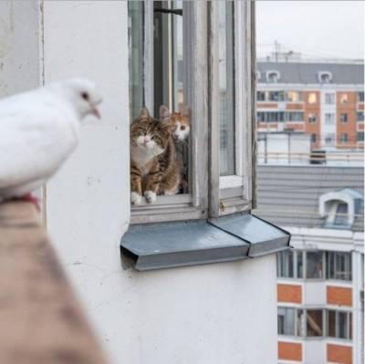 коты спасают голубя