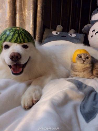 шапка из фруктов на животном
